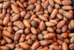 Puur natuurlijk genieten van rauwe pecannoten in dop of onze andere naturel noten is gezond.